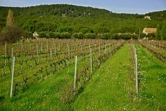 Виноградники Cassis на предпосылке зимы голубого неба Стоковые Фото