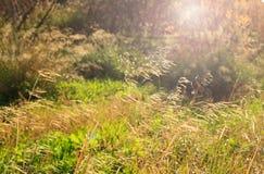 Виноградники Cassis на предпосылке зимы голубого неба Стоковые Фотографии RF