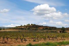 Виноградники Catalunya Penedes Стоковое Изображение RF