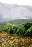 Виноградники Franschhoek и гористые местности Крыма стоковые изображения rf