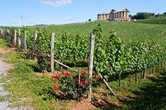 виноградники goncalves bento стоковые изображения rf