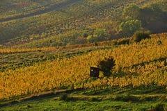 Виноградники Grinzing стоковое изображение rf