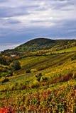 Виноградники Kahlenberg Стоковые Фотографии RF