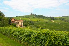 виноградники langhe Италии Стоковое фото RF