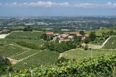 Виноградники Langhe Cuneo, Пьемонта, Италии на лете стоковые фото