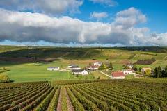 Виноградники Loire Valley, Франции стоковые фото