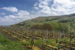 Виноградники Oltrepo Pavese в апреле стоковые изображения rf
