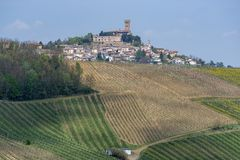 Виноградники Oltrepo Pavese в апреле стоковое изображение