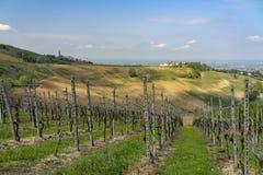 Виноградники Oltrepo Pavese в апреле стоковая фотография