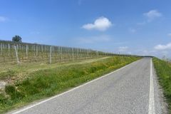 Виноградники Oltrepo Pavese в апреле стоковая фотография rf