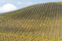 Виноградники Oltrepo Pavese в апреле стоковые изображения