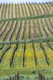 Виноградники Oltrepo Pavese в апреле стоковые фото