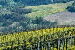 Виноградники Oltrepo Pavese в апреле стоковое фото rf