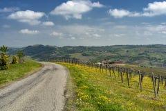 Виноградники Oltrepo Pavese в апреле стоковые фотографии rf