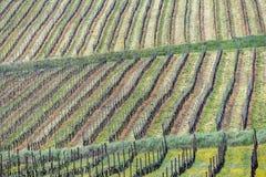 Виноградники Oltrepo Pavese в апреле стоковое фото