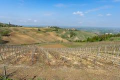 Виноградники Oltrepo Pavese в апреле стоковое изображение rf