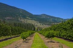 виноградники osoyoos садов b c стоковые изображения rf