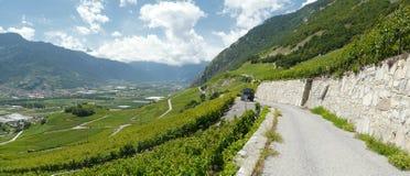 Виноградники saillon wallis Швейцарии Стоковое Изображение RF