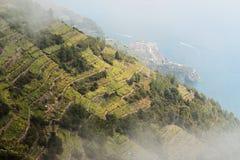 виноградники terre Италии cinque Стоковое Изображение