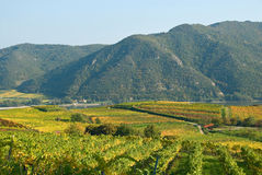 виноградник Австралии цветастый Стоковые Изображения