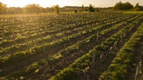 Виноградник Аквитания Бордо вида с воздуха, Франция стоковая фотография
