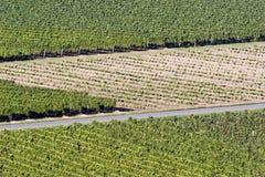 виноградник Бордо Стоковые Фотографии RF