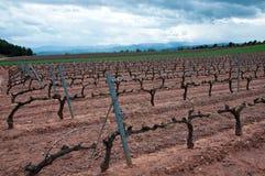 виноградник весны Испании rioja la Стоковая Фотография