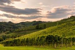 Виноградник в вечере вдоль южной трассы лозы Styrian в Au Стоковая Фотография
