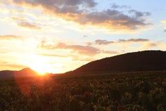 Виноградник в заходе солнца Стоковое Изображение