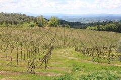 Виноградник в Тоскане Стоковое Фото
