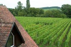 Виноградник в Франции Стоковые Фотографии RF