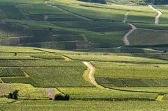 Виноградник в франция стоковое фото rf