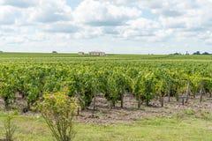 Виноградник в Medoc около Бордо в Франции стоковое изображение rf