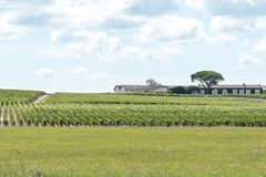Виноградник в Medoc около Бордо в Франции стоковая фотография rf