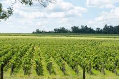 Виноградник в Medoc около Бордо в Франции Стоковое фото RF