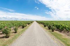 Виноградник в Medoc около Бордо в Франции стоковые фото