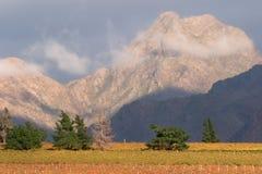 виноградник городка ландшафта плащи-накидк области Африки южный Стоковое фото RF
