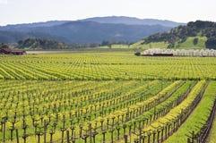 виноградник долины весны napa Стоковое фото RF