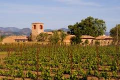 виноградник долины захода солнца napa Стоковая Фотография RF
