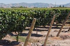 виноградник долины colchagua Чили Стоковое фото RF