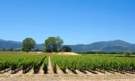 виноградник долины napa Стоковые Изображения RF