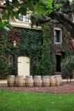 виноградник долины napa california Стоковая Фотография RF