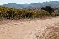 виноградник дороги Стоковые Изображения