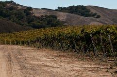 виноградник дороги califonria Стоковая Фотография