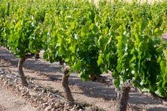 виноградник Испании стоковые фото