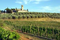 виноградник Италии Тосканы Стоковые Изображения RF