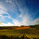 виноградник Италии стоковые изображения rf