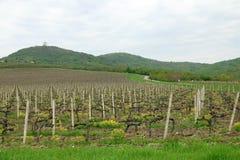 Виноградник и зеленые холмы Стоковые Изображения