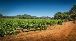 Виноградник и холмы - земледелие, ландшафт сельской местности Стоковое Изображение