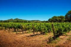 Виноградник и холмы - земледелие, ландшафт сельской местности Стоковые Фото